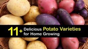 Potato Varieties titleimg1