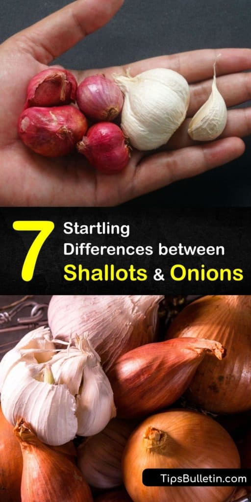 Learn the difference between shallots and onions. Use shallots in sauces or as a garnish and yellow onions as a base for heavier meals. Find out allium family substitutes for shallots like red onions, white onions, and scallions. Plus, try our caramelized shallots recipe. #shallots #onions #alliums