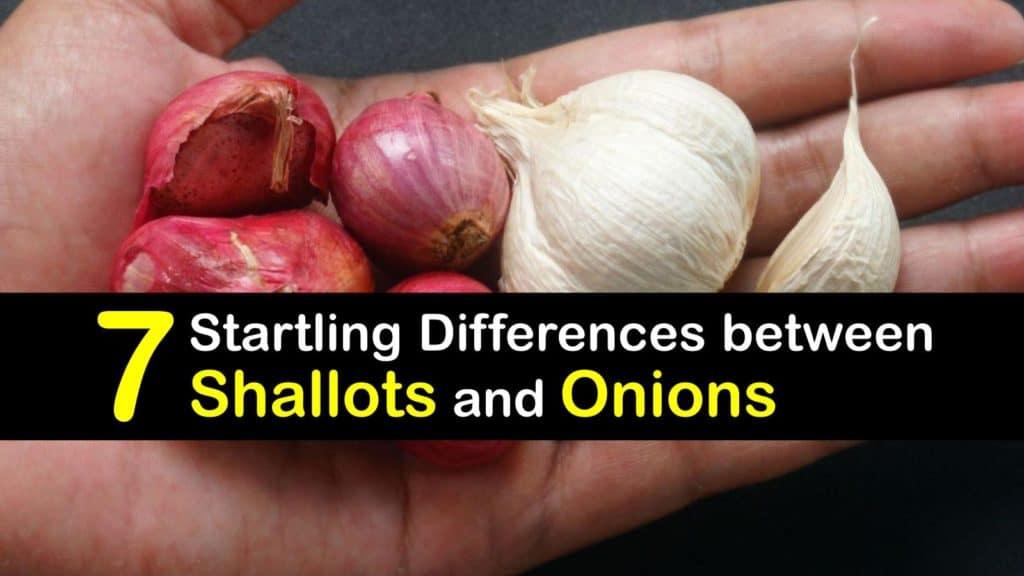 Shallots vs Onions titleimg1