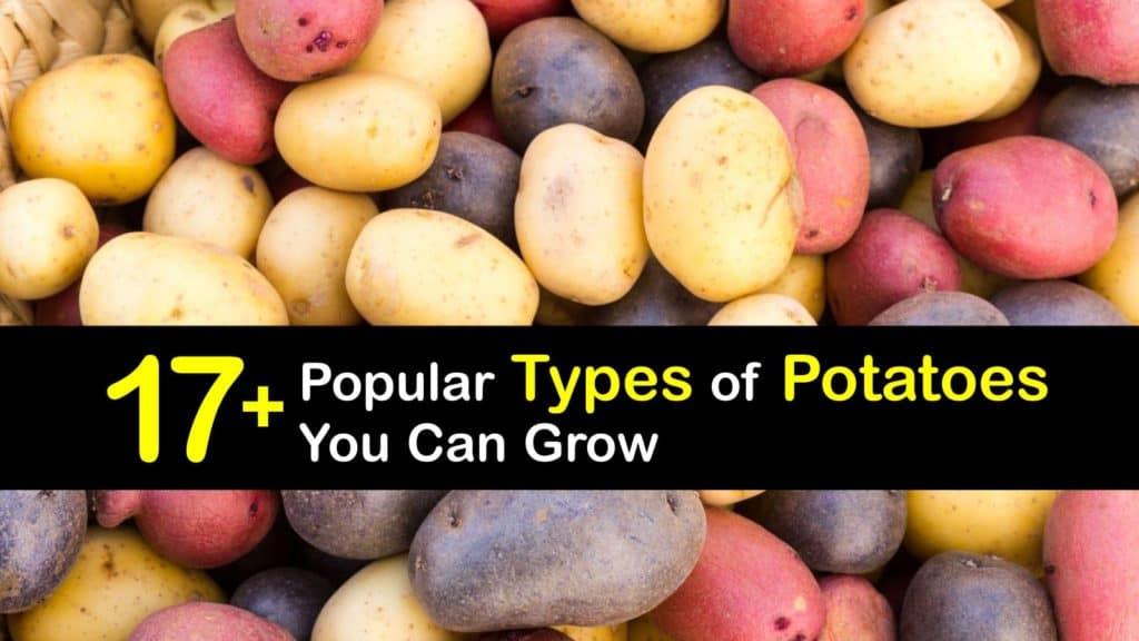 Types of Potatoes titleimg1