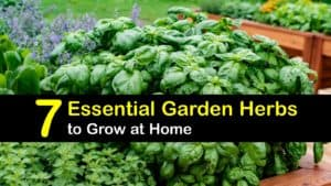 Herbs to Grow in Your Garden titleimg1