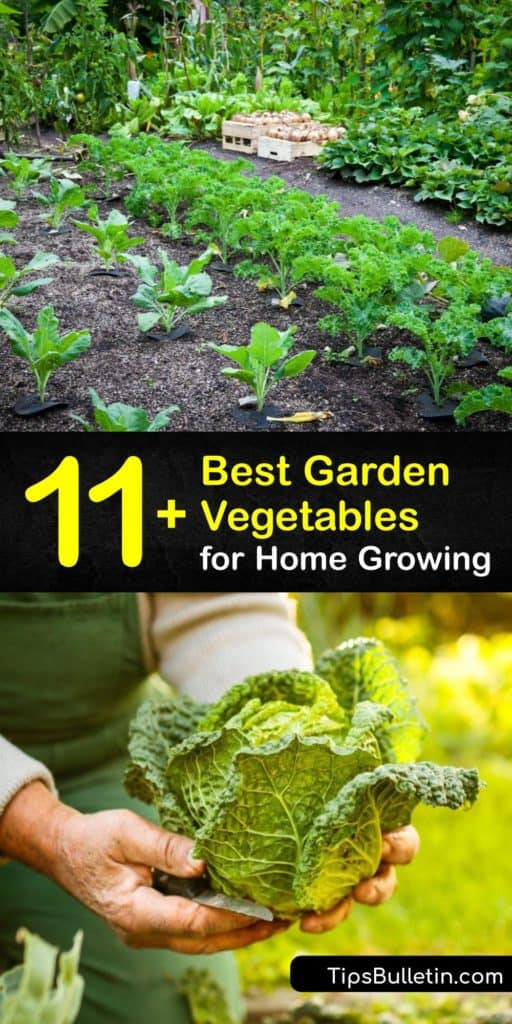 Use this list of garden veggies featuring bush beans, bell peppers, pole beans, zucchini, and Brussels sprouts to start a garden in the early spring and help it thrive through the growing season. Grab a trellis and prep your raised beds for these delicious fresh veggies. #vegetables #grow #garden