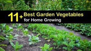 Best Vegetables to Grow in Your Garden titleimg1