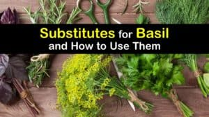 Substitute for Basil titleimg1