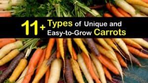 Types of Carrots titleimg1