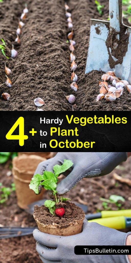 Plant a fall garden past the late summer and the first frost to use your yard year-round and have a harvest in the early spring. It's possible to have a vegetable garden full of kohlrabi, Swiss chard, and Brussels sprouts when you use mulch with cold-season plants. #vegetables #planting #october