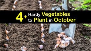 Vegetables to Plant in October titleimg1