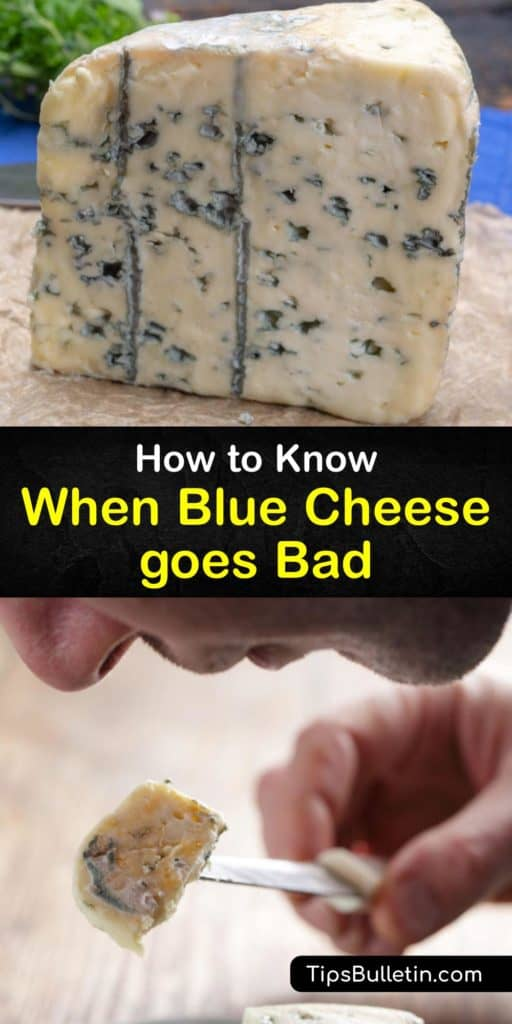 Find out whether blue cheeses like gorgonzola go bad. The edible Penicillium mold gives blue cheese its characteristic blue veins. However, toxic molds that cause food poisoning can develop. Wrap your cheese in wax paper and plastic wrap to prevent spoilage. #bluecheese #fresh #spoiled