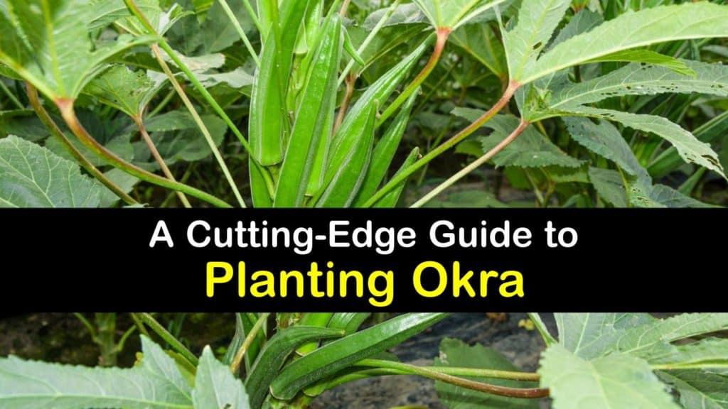 How to Plant Okra titleimg1