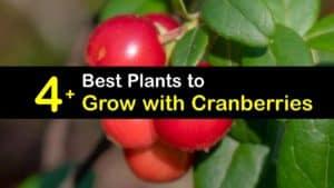 Cranberry Companion Plants titleimg1