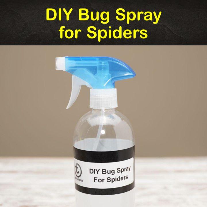 DIY Bug Spray for Spiders