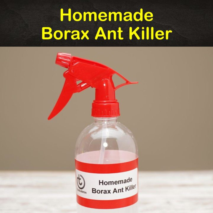 Homemade Borax Ant Killer