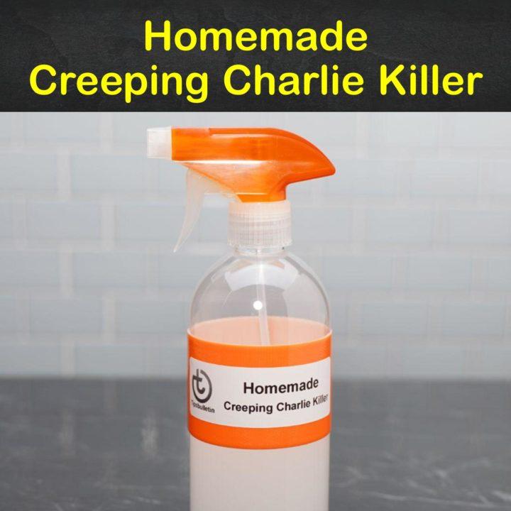 Homemade Creeping Charlie Killer