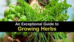 How to Plant Herbs titleimg1