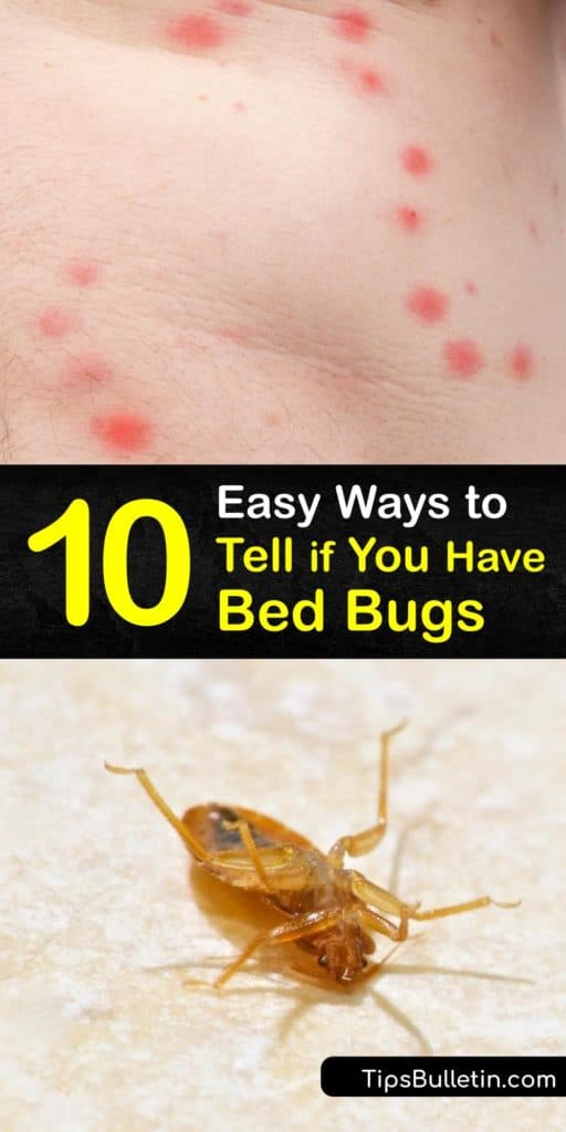 Learn how to identify and eliminate a bed bug problem. Their favorite hiding places include bed frames, headboards, and wall crevices. Adult bed bugs are the size of an apple seed. They cause itchy bites and blood stains on the bedding. #pest #control #bedbugs