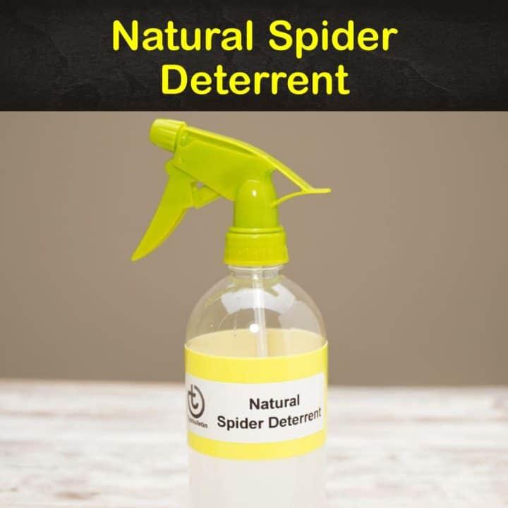 Natural Spider Deterrent