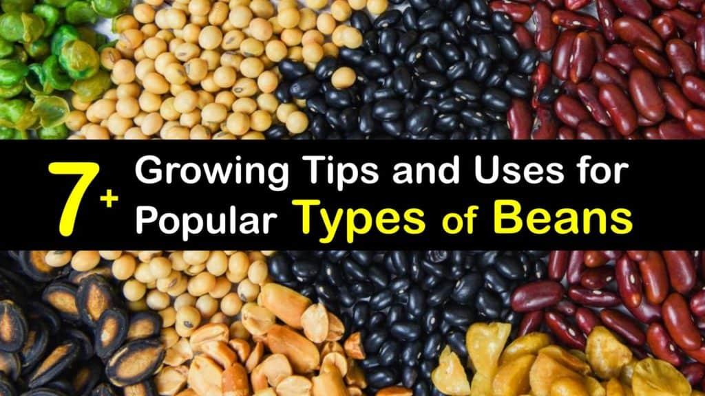 Types of Beans titleimg1