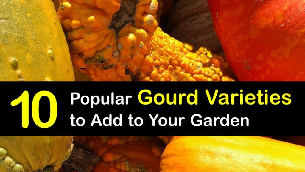 Types of Gourds titleimg1