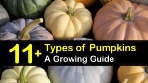 Types of Pumpkins titleimg1