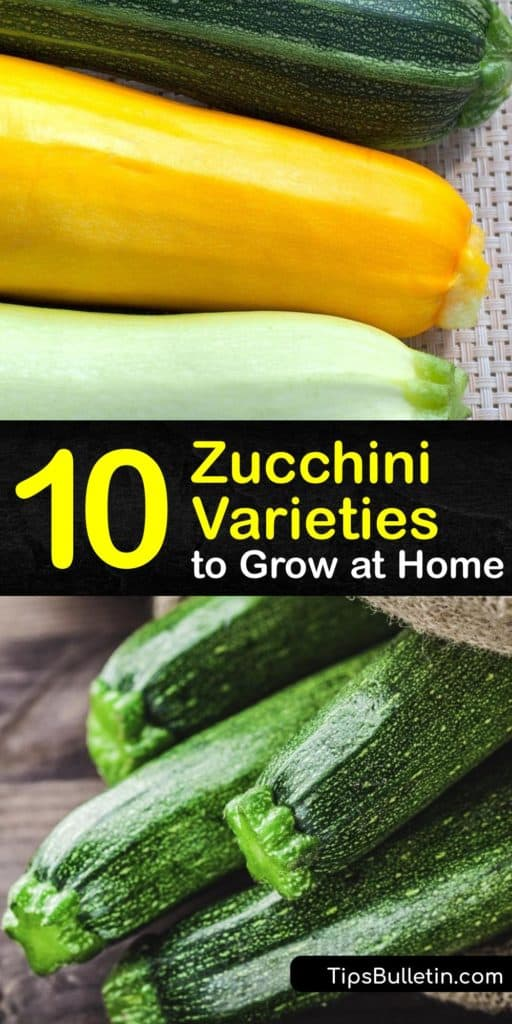 Expand your knowledge of Italian heirloom summer and winter squash types with this list of unique cultivars such as the Black Beauty, Crookneck, Acorn, and Round zucchinis. They have dark green, pale green, and light green skins that fill your plate with beautiful colors. #types #zucchini #varieties