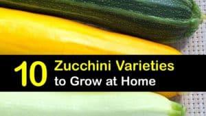 Types of Zucchini titleimg1