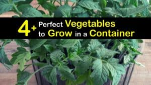 Vegetables to Grow in Containers titleimg1