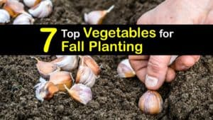 Vegetables to Plant in Fall titleimg1