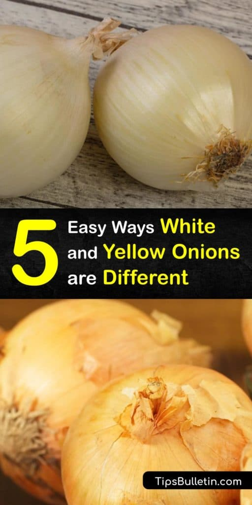 There are many onion types at the grocery store, from Vidalia, Walla Walla, and green onions to shallots and scallions. Learn the differences between yellow and white onions, their flavor and nutritional values, and ways to use them in recipes. #differences #whiteonions #yellowonions