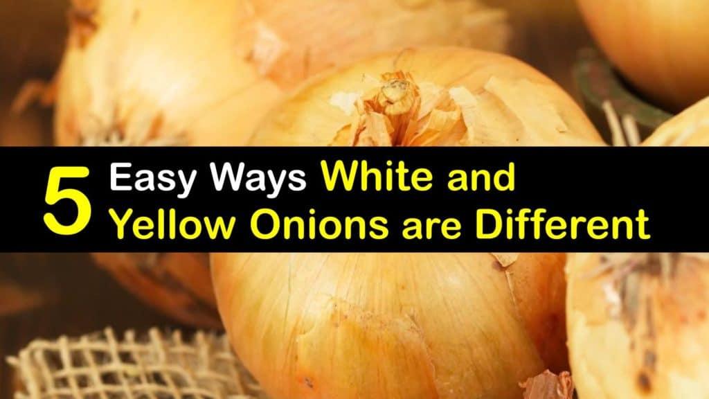 White Onion vs Yellow Onion titleimg1