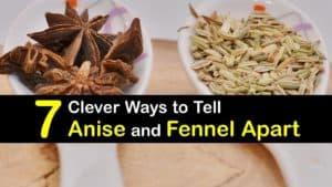 Fennel vs Anise titleimg1