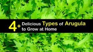 Types of Arugula titleimg1