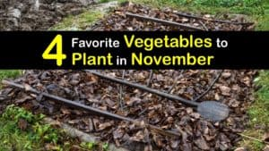 Vegetables to Plant in November titleimg1